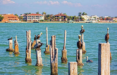 Photograph - Hangin' Out With My Pals by HH Photography of Florida