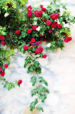 White Rose Photograph - Hangin Roses by Marilyn Hunt