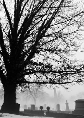 Photograph - Hangin' Tree by Brenda Conrad