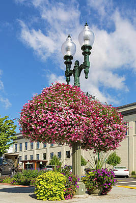 Photograph - Hanging And Potted Plants In Lynden Washington by David Gn