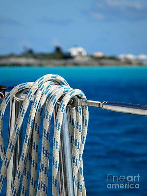 Photograph - Hanging Around by Lainie Wrightson