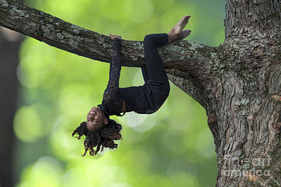 Photograph - Hanging Around On A Tree Limb by Dan Friend