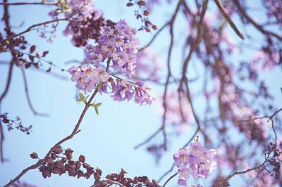 Photograph - Hanging Around. Paulownia Tomentosa  by Jenny Rainbow