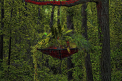 Photograph - Hanging Basket In The Woods by Cathy Harper