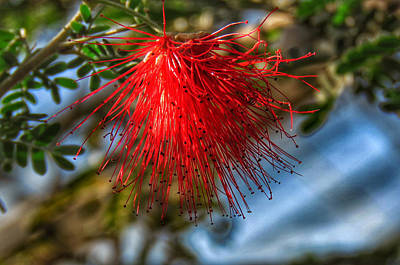 Photograph - Hanging Beauty by Kathi Isserman