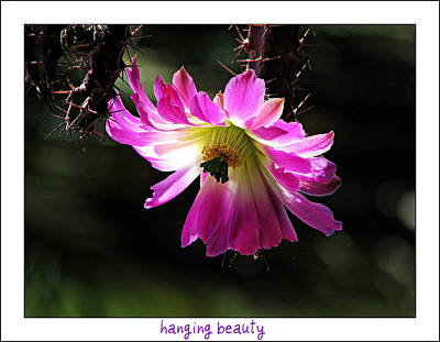 Photograph - Hanging Beauty by Terry Temple