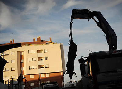Corrida Photograph - Hanging Bull by Rafa Rivas
