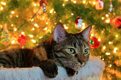 Photograph - Hanging By The Tree by Catie Canetti