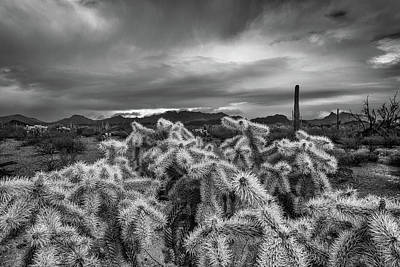 Organ Pipes Photograph - Hanging Chain Cholla by Joseph Smith