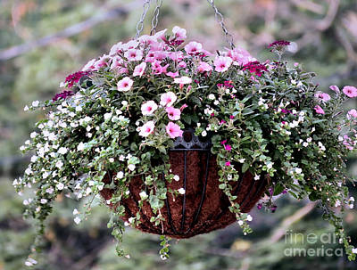 Photograph - Hanging Flower Basket by Janice Drew