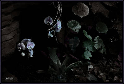 Photograph - Hanging Flowers by Wayne King