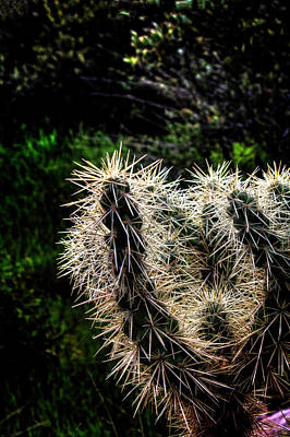 Photograph - Hanging Fruit Cholla Detail by Roger Passman