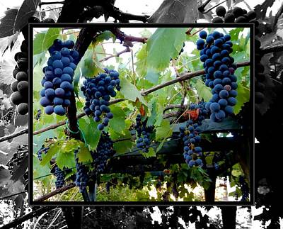 Winemaking Digital Art - Hanging Grapes by Dorothy Berry-Lound