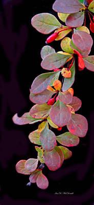 Flora Macdonald Digital Art - Hanging by Ian  MacDonald