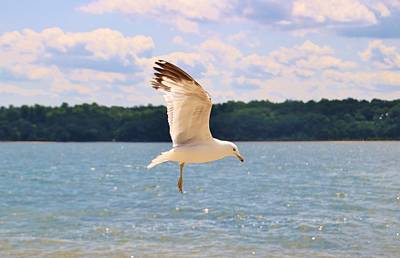 Photograph - Hanging In Mid Air by Karen Silvestri