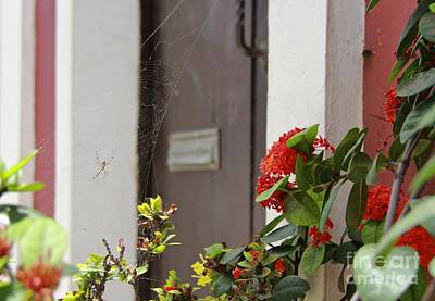 Photograph - Hanging In Old San Juan  by Suzanne Oesterling