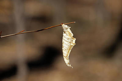 Photograph - Hanging On 042918 by Mary Bedy