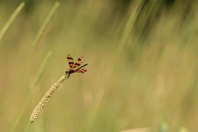 Photograph - Hanging On For Dear Life by Joni Eskridge