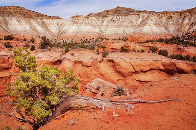 Photograph - Hanging On The Cliff At Kodachrome Basin State Park by Daniela Constantinescu