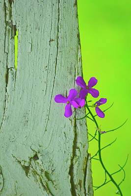 Photograph - Hanging On The Fence by Tracy Rice Frame Of Mind