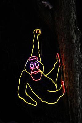 Photograph - Hanging Orangutan by Steven Parker