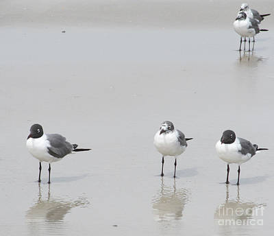 Southern Pottery Photograph - Hanging Out At The Beach by Sharon Nelson-Bianco
