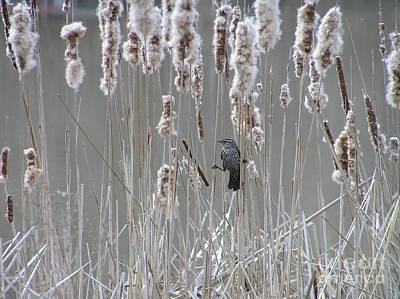 Photograph - Hanging Out In The Marsh by Susan  Dimitrakopoulos