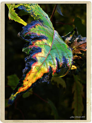 Art Print featuring the photograph Hanging Out by Joan  Minchak