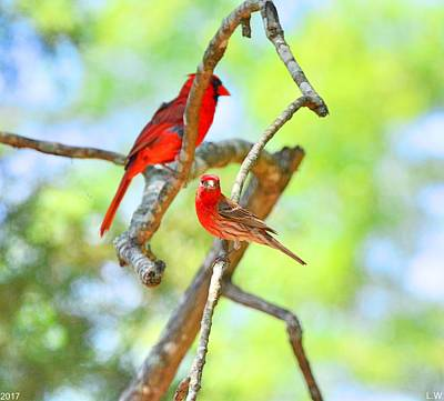 Photograph - Hanging Out by Lisa Wooten