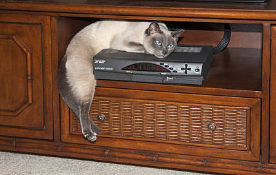 Tonkinese Photograph - Hanging Out by Sally Weigand