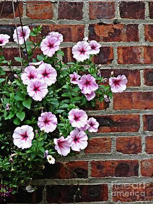 Photograph - Hanging Petunias by Sarah Loft