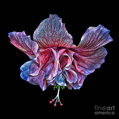 Photograph - Hanging Pink Hibiscus by Walt Foegelle