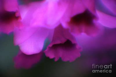 Photograph - Hanging Purple Tropical Flowers Up Close- Kauai- Hawaii by Rick Bures
