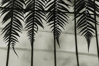 Photograph - Hanging Together by Patricia Strand