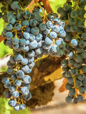 Photograph - Hanging Wine by David Letts