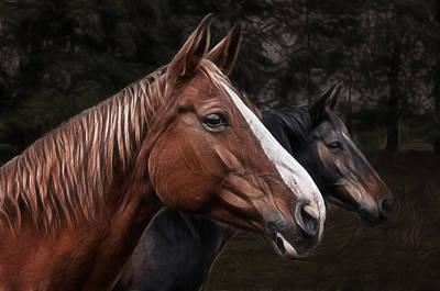 Hanoverian Photograph - Hanoverians by Joachim G Pinkawa