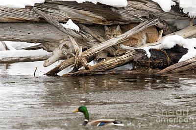 Photograph - Duck Blind  by Aaron Whittemore