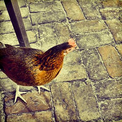 Photograph - Happening Hen by JAMART Photography
