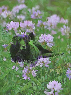 Labrador Digital Art - Happiness Is A Field Of Clover by Theresa Campbell
