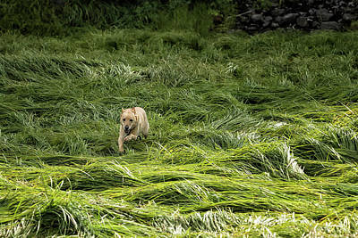 Photograph - Happiness Is Running Through A Field Of Grass by Belinda Greb