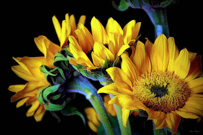 Photograph - Happiness Is Sun Flowers by John Rivera