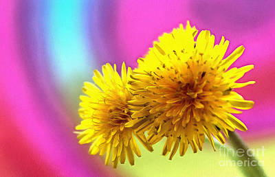 Colorful Dandelions Photograph - Happiness by Krissy Katsimbras