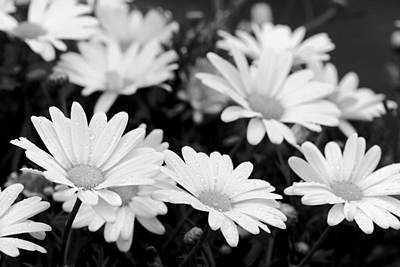 Photograph - Happy After Rain Shower - Black And White by Angela Rath