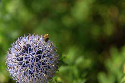 Photograph - Happy Bee by Lora Lee Chapman