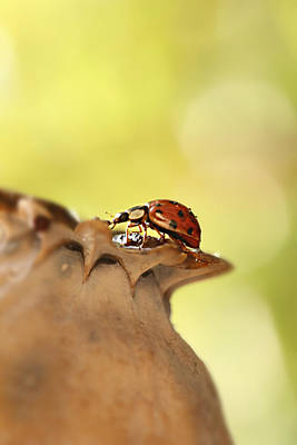 Realism Photograph - Happy Beetle by Heike Hultsch