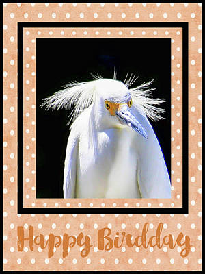 Photograph - Happy Birdday by HH Photography of Florida