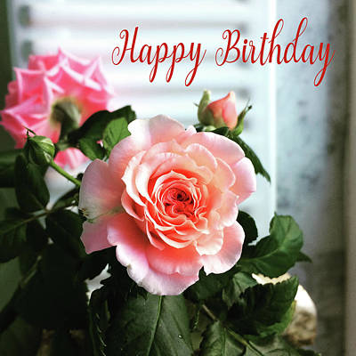 Photograph - Happy Birthday 105 by Ericamaxine Price