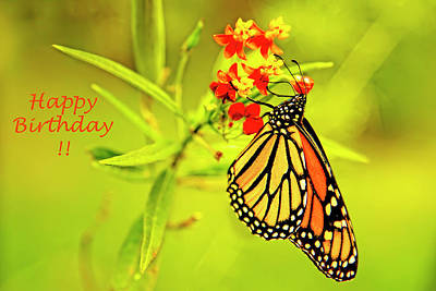 Photograph - Happy Birthday Butterfly Greeting Card by Kay Brewer