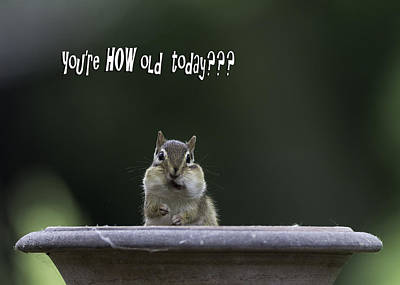 Chipmunk Photograph - Happy Birthday by Everet Regal