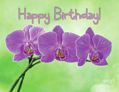 Photograph - Happy Birthday Pink Orchids by Alana Ranney